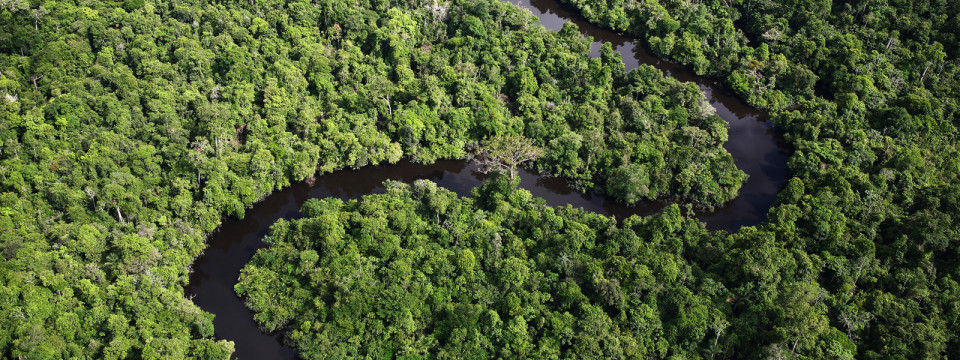 Investor buys stake in Guyana forest